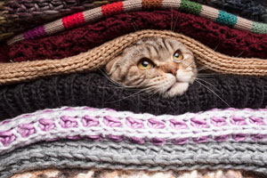 Cat snug in between blankets